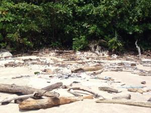 Müll hinter dem Strand