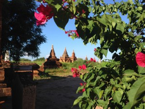 Ende Oktober ist alles grün in Bagan, in der Trockenzeit sieht das deutlich anders aus...