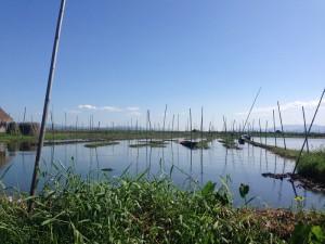 Mitten auf dem See wird Gemüse angebaut, dass man vom Boot aus erntet.