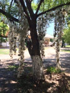 Glasbaum